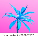 aloe. art gallery fashion... | Shutterstock . vector #732087796