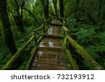 rain forest  nature trail. | Shutterstock . vector #732193912
