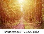 yellow autumn forest background.... | Shutterstock . vector #732231865