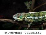 chameleon | Shutterstock . vector #732251662