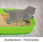 british blue kitten in green... | Shutterstock . vector #732322606