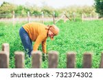 mature woman working in the...   Shutterstock . vector #732374302