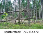 A Fallen Tree. A Large Old Tre...