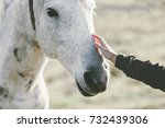 white horse head hand touching... | Shutterstock . vector #732439306