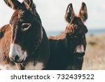 Donkeys farm animal brown...