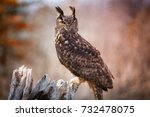 Stock photo eurasian eagle owl 732478075