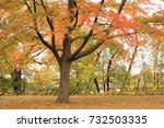foliage  mn   Shutterstock . vector #732503335