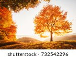 Small photo of Awesome image of the shiny beech tree on a hill slope at mountain valley. Dramatic scene. Orange and yellow leaves. Location place Carpathians, Ukraine, Europe. Beauty world. Breathtaking wallpaper.