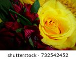 Yellow Rose And Red  Tiger...