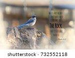 Blue Scrub Jay Bird Perched On...