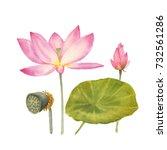 botanical watercolor...   Shutterstock . vector #732561286