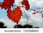 Orange Autumn Heart Shaped Vin...