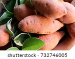 sweet potato | Shutterstock . vector #732746005