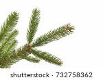 fir branch isolated on white | Shutterstock . vector #732758362