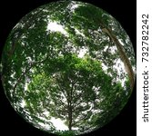 Small photo of The fisheye represents the Earth. Conserve big trees and improve the global greenery to maximise the advantages of having their presence.