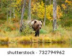 autumn trees with bear.... | Shutterstock . vector #732794962