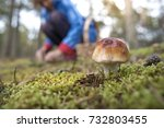 close up of an edible mushroom... | Shutterstock . vector #732803455