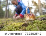 close up of an edible mushroom... | Shutterstock . vector #732803542