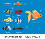 exotic tropical aquarium fish...   Shutterstock .eps vector #732849676