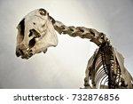 horse skeleton  bottom view... | Shutterstock . vector #732876856
