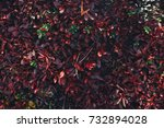 nature backgrounds. natural...   Shutterstock . vector #732894028