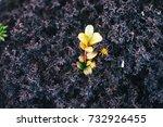 nature backgrounds. natural...   Shutterstock . vector #732926455