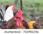 cock  | Shutterstock . vector #732981256