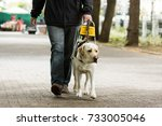 guide dog leading a blind man... | Shutterstock . vector #733005046