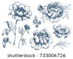 Vector Floral Set With Peonie...