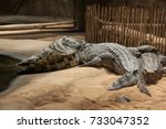 group of alligators on rocks  | Shutterstock . vector #733047352