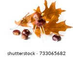 Chestnut Toy Isolated On Whit...