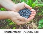 wild blackberry in the hands.... | Shutterstock . vector #733087438