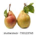 pears on white background.   Shutterstock . vector #733123765