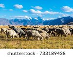 goat grazing in the field at... | Shutterstock . vector #733189438