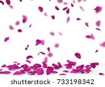 Violet rose petals fall to the...