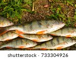 fresh catch of fish lying on... | Shutterstock . vector #733304926