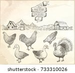 collection of farm poultry.... | Shutterstock .eps vector #733310026
