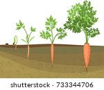 stages of growth of carrots on... | Shutterstock .eps vector #733344706
