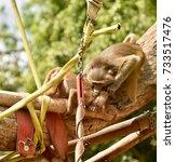 baboon | Shutterstock . vector #733517476