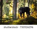 dog in forest | Shutterstock . vector #733526296