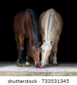 Stock photo two horses eating apple on black background 733531345