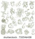garden fruits. hand drawn... | Shutterstock .eps vector #733546438