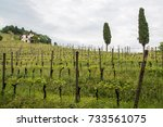 walk through woods and vineyards | Shutterstock . vector #733561075