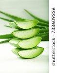 ayurveda medicinal plant aloe... | Shutterstock . vector #733609336