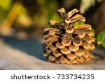 Pine Cone Close Up On Blurred...