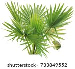 young betel palm on isolate...   Shutterstock . vector #733849552
