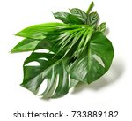 various tropical leaves... | Shutterstock . vector #733889182