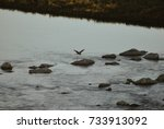 heron flying. birds in the... | Shutterstock . vector #733913092