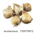 bulbs of broad leaved grape... | Shutterstock . vector #733979872
