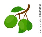 shea cosmetics organic plant....   Shutterstock . vector #734030152